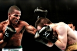 Sting boxing gloves – Is there poison in the sting?